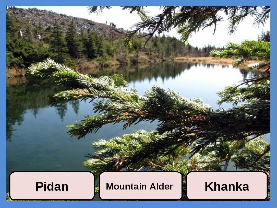 Pidan Mountain Alder Khanka