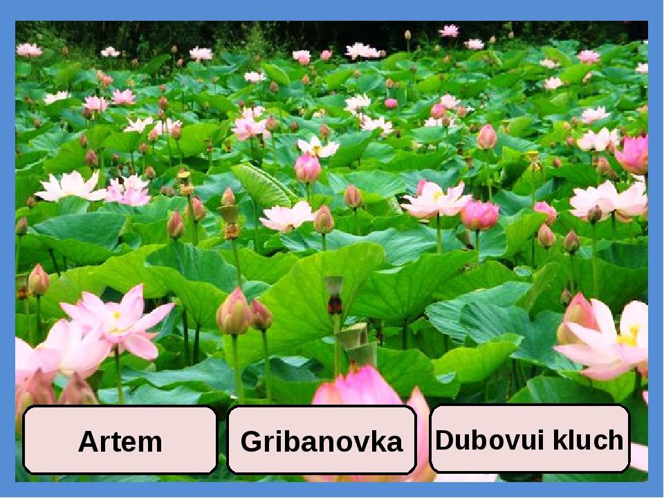 Gribanovka Dubovui kluch Artem